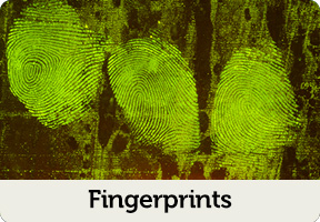 fingerprint forensics