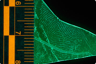 fluorescent latent fingerprint